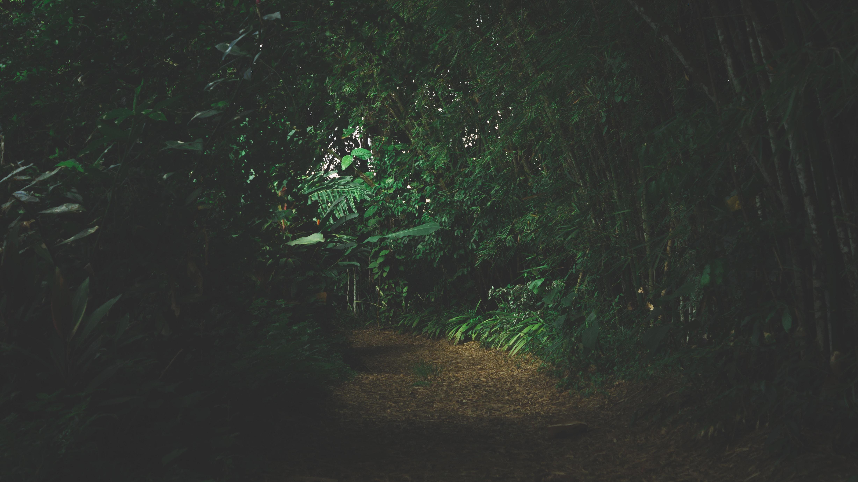 Lusiroeula 2019: la danza delle lucciole al Parco delle Cave